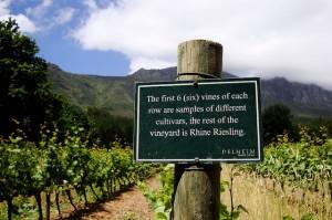 delheim-estate-wijn-zuid-afrika-1